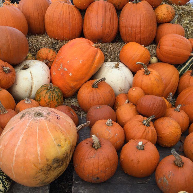 estacao-aboboras-outono-londres