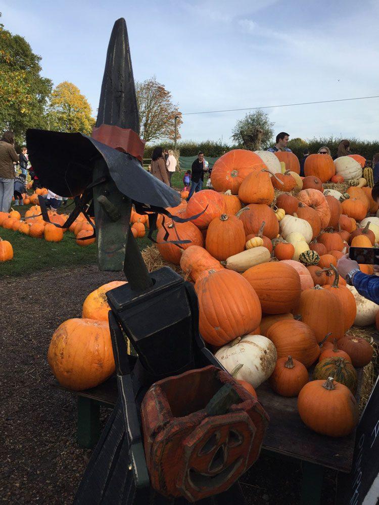 halloween-fazenda-crockford-aboboras