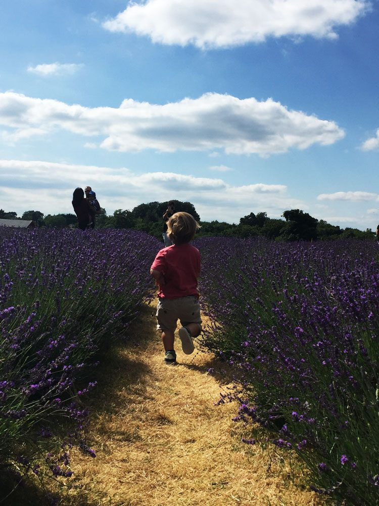 mayfield-lavender-farm-uk
