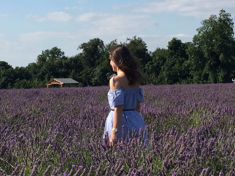 passeio-mayfield-lavender-londres