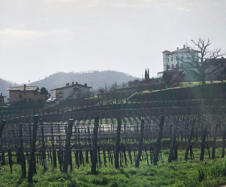 vinicolas-eslovenia