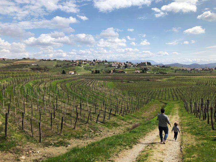 vinicolas-familia-eslovenia