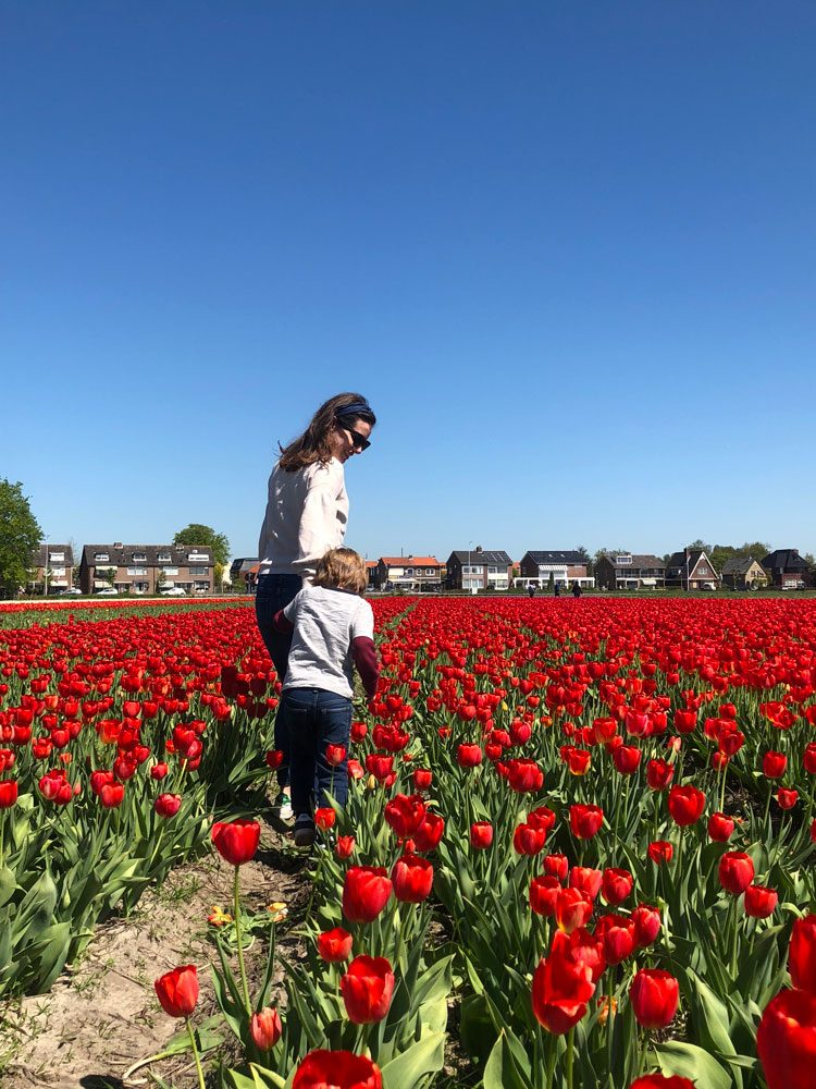 campos-tulipas-holanda