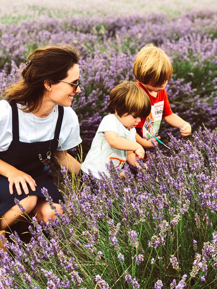 lavender-uk
