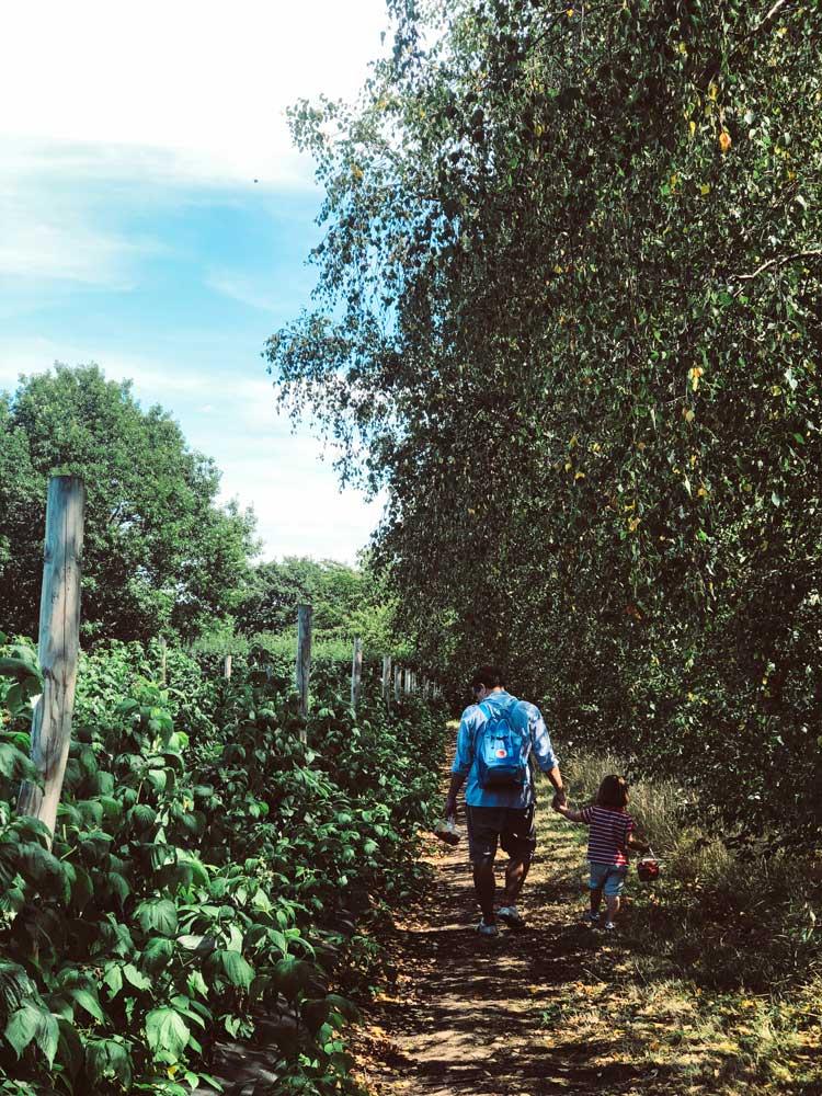 campos-framboesas-crockford-farm