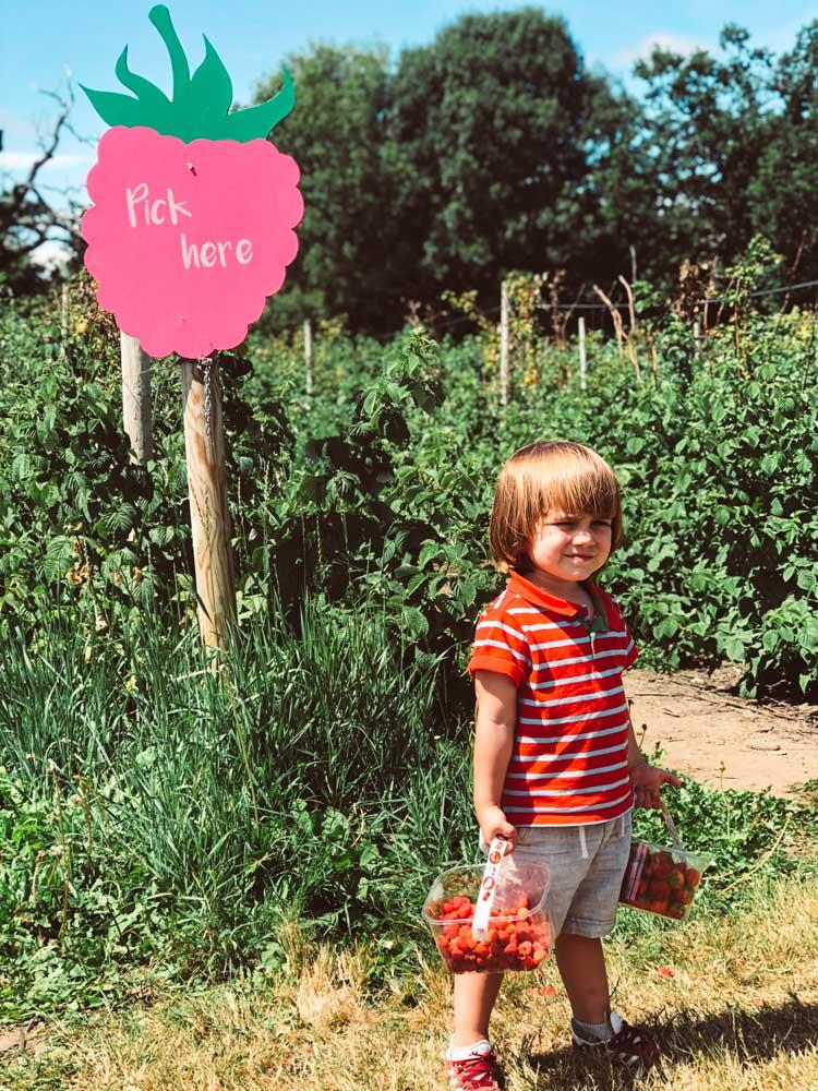 pick-here-morangos
